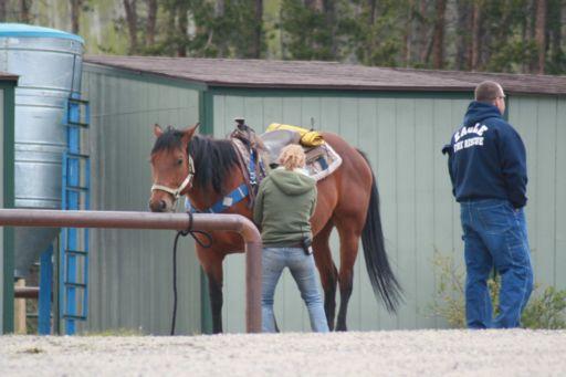 Keystone Stables, preparing a horse