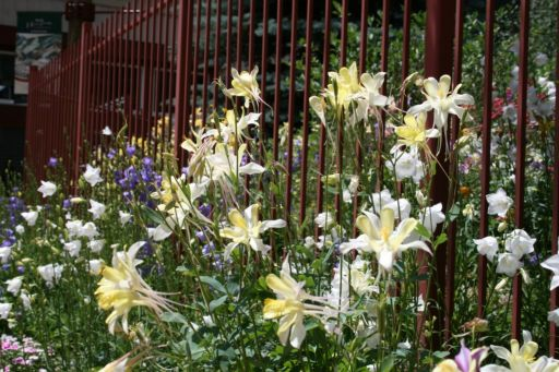 keystone-wildflowers