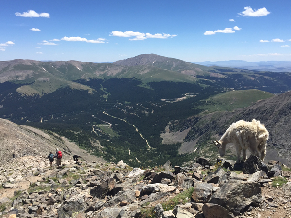 Mountain Goat Summit County CO