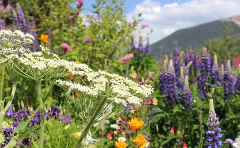 Colorful Wildflowers at Keystone Resort